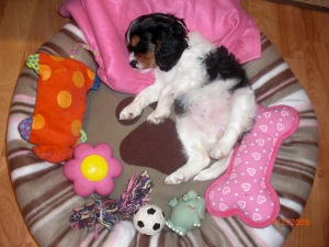 Puppy Love: Welcome Home Gifts